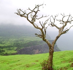 Trek to Naneghat Wild Escapes