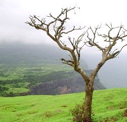 Trek to Naneghat